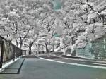 赤外線写真 (Infrared Photography):山の上ホテル近く HDR合成