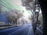 赤外線写真:浄水通り(QV-R40, SC60)