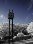 赤外線写真 (Infrared Photography):大濠公園