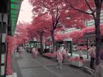 赤外線写真 (infrared Photography) : 天神コア前