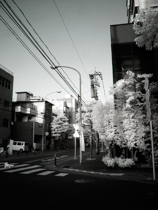 赤外線写真(InfraRed Photography):西公園前