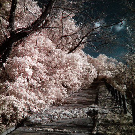 (赤外線写真)Infrared Photography