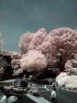 赤外線写真 (infrared Photography) : 東京・上野の森公園