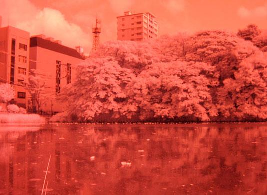 赤外線写真:福岡地方裁判所北側のお濠