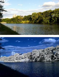 通常の写真と赤外線写真の比較