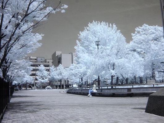 赤外線写真:冷泉公園(福岡市博多区)