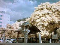 赤外線写真の福岡市、警固神社