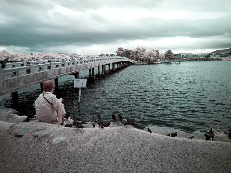 赤外線写真で見る大濠公園